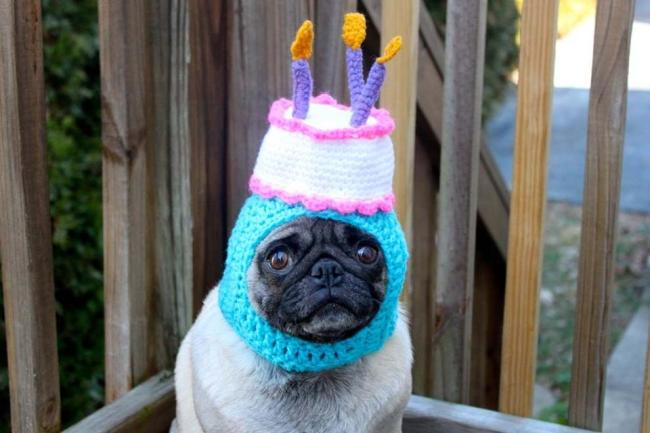 Blind Stab Pug Birthday Cake Hat